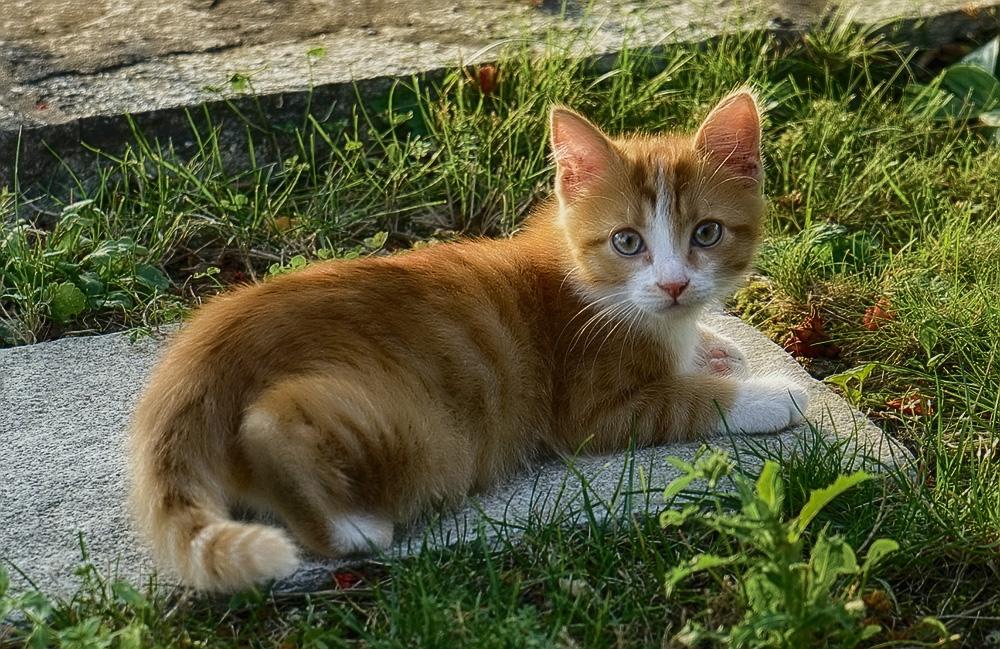 Серная Мазь Инструкция По Применению Для Кошек
