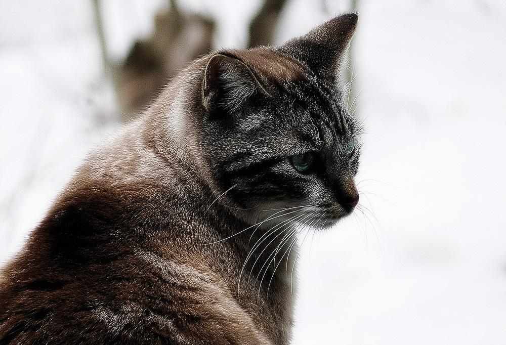Непроходимость кишечника у кошек: симптомы и лечение