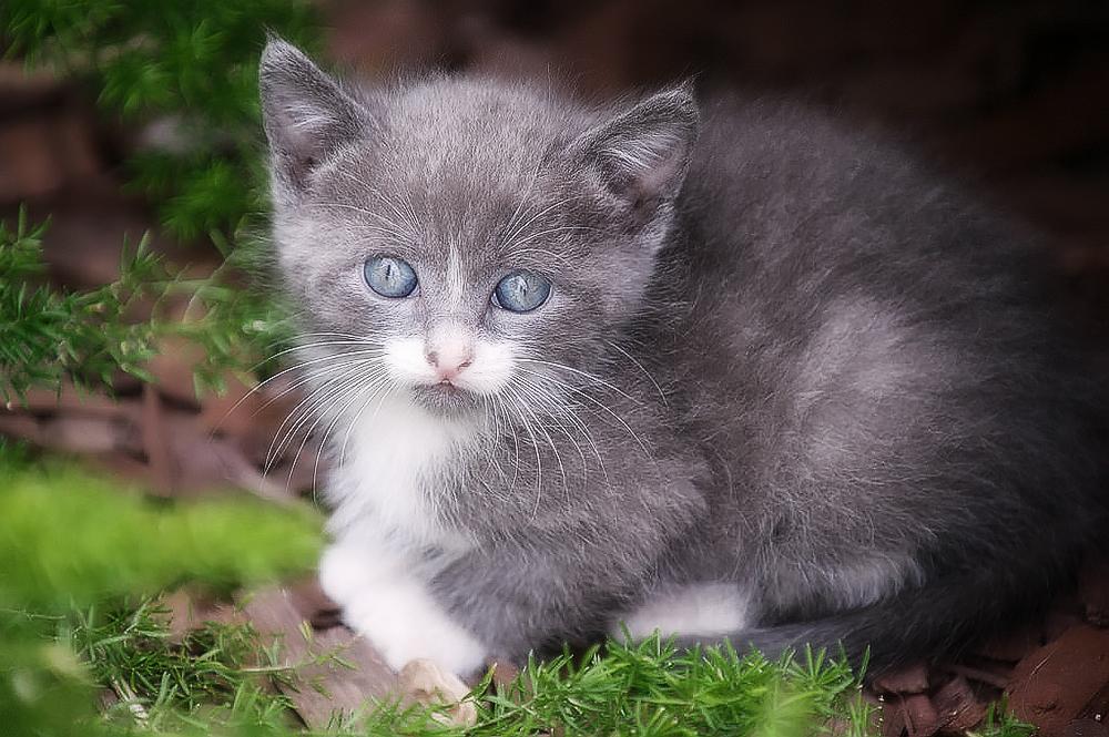 У кошки выпадает шерсть клоками: что делать?