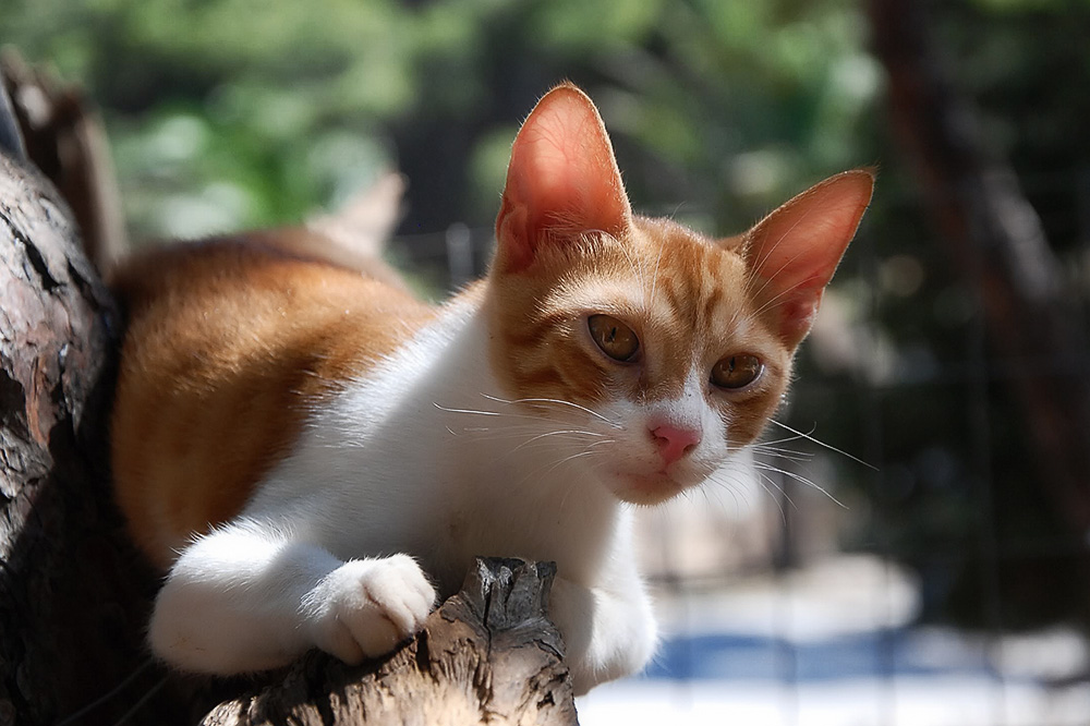 Мазь от лишая для кошек
