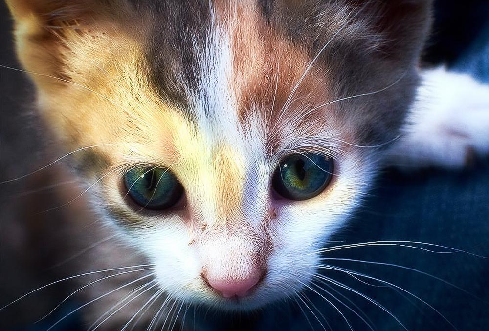 Болезни котят: симптомы и лечение