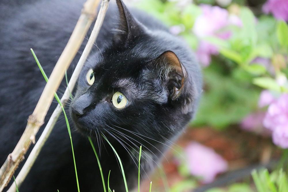 Травматин: инструкция по применению для кошек