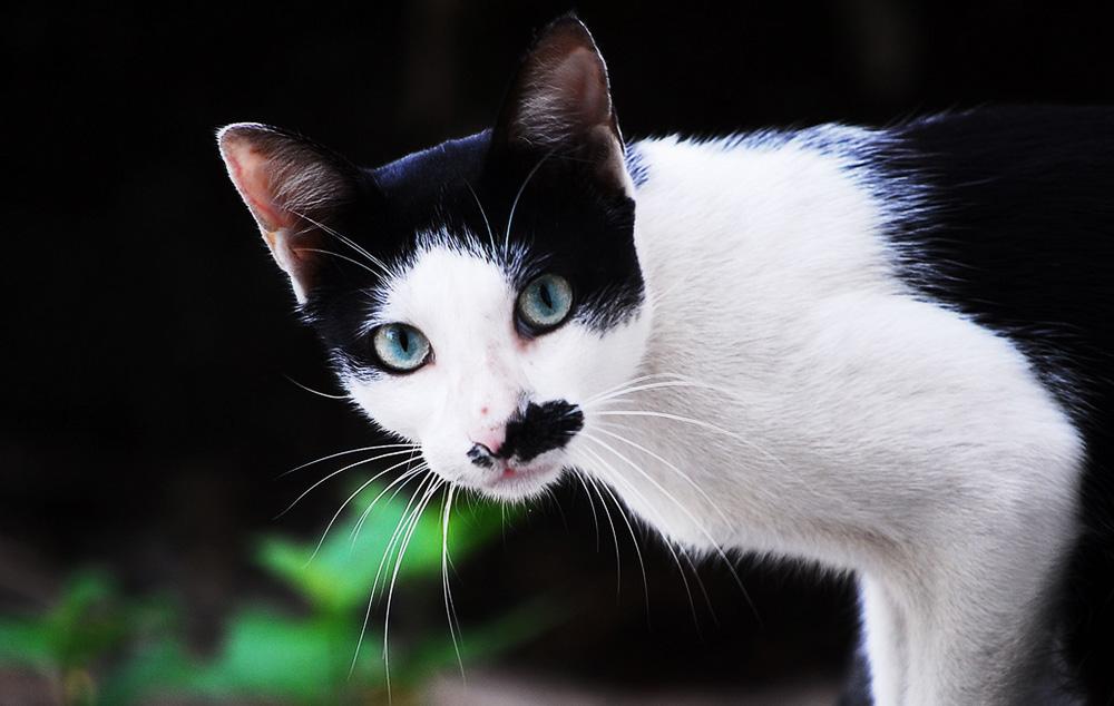 У кота рвота и понос: что делать