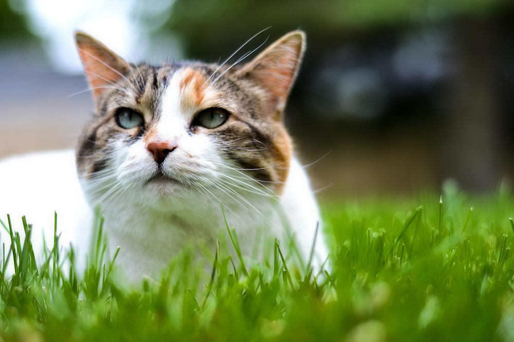 Ошейник от блох и клещей для кошек