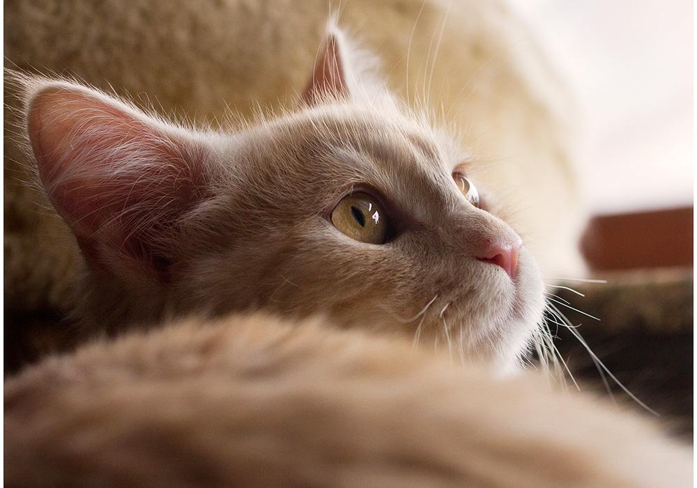 Судороги у кота: что делать?