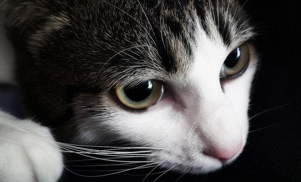У кошки в кале кровь со слизью