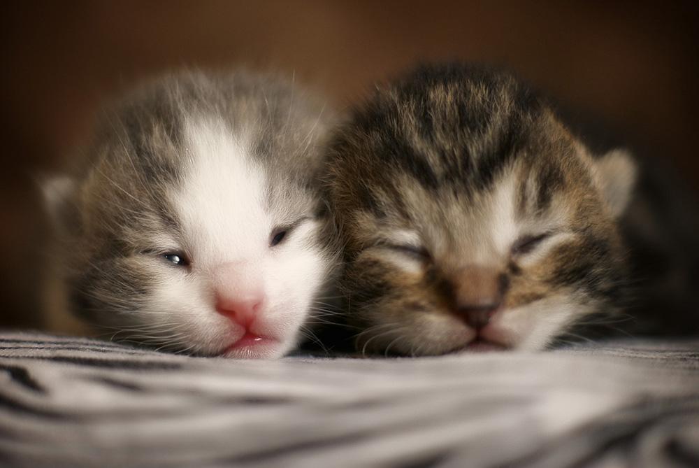 Выделения у кошки после родов