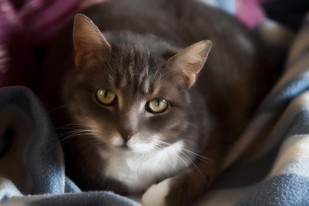 """Вакцина """"Нобивак"""" для кошек"""