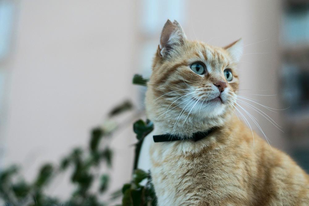 Максидин Инструкция По Применению Для Кошек Цена - фото 7