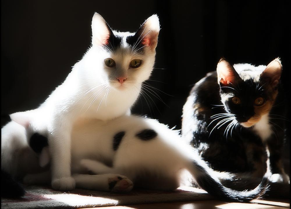 Клички для кошек: имена для девочек