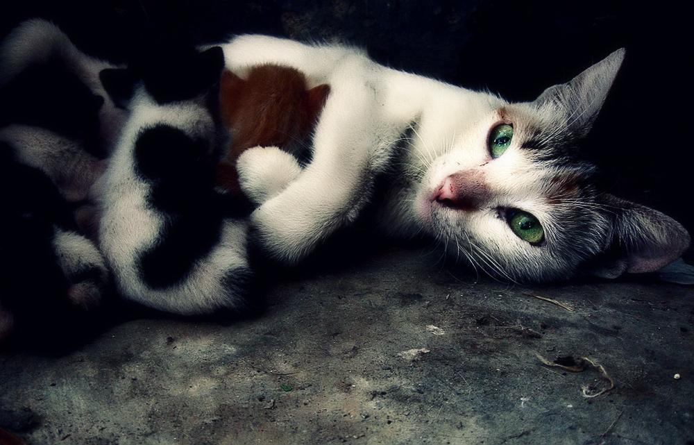 Выделения у беременной кошки
