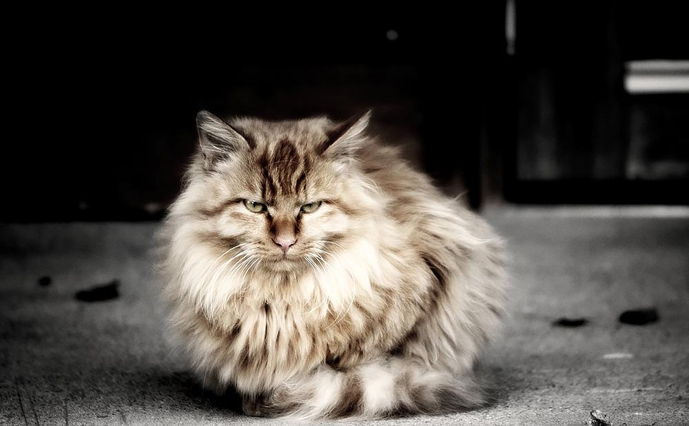 Пережить усыпление кота
