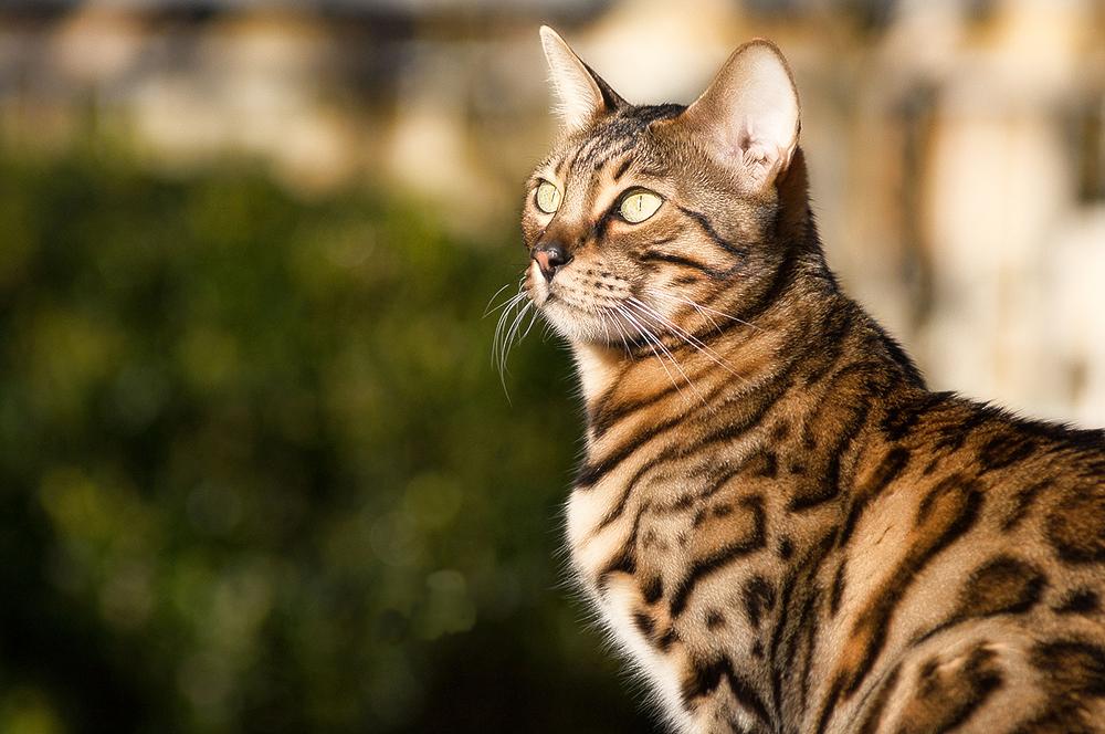 Гингивит: симптомы и лечение у кошек