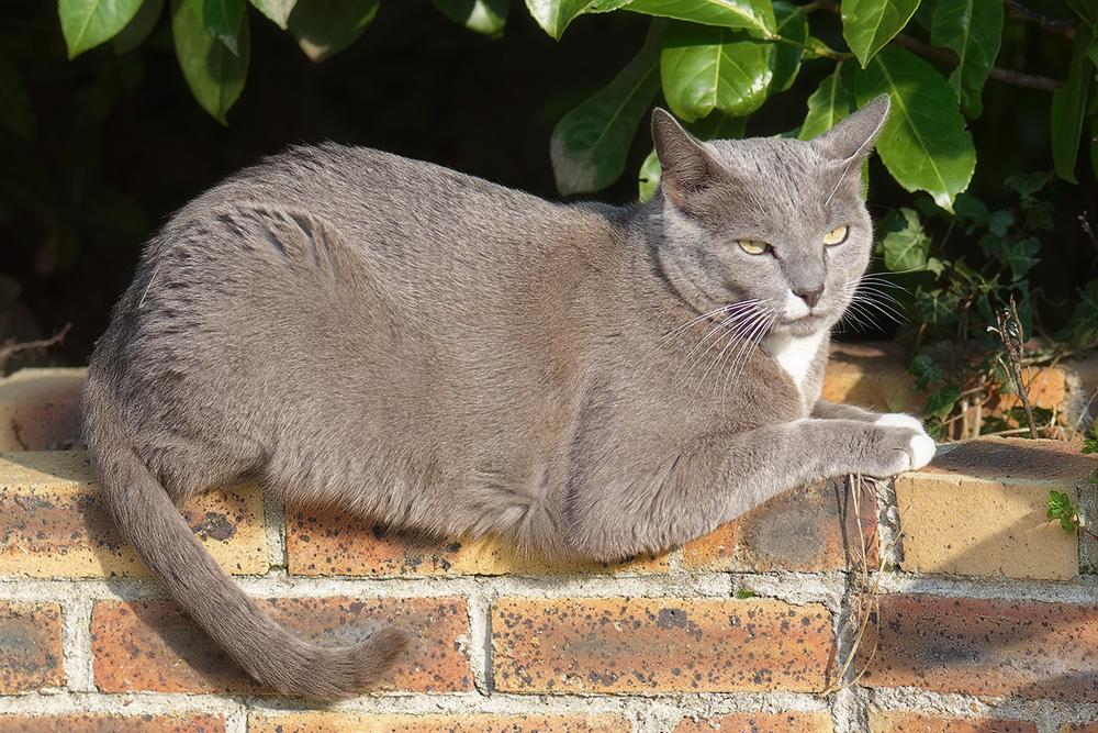 У кошки текут слюни: норма или отклонение?