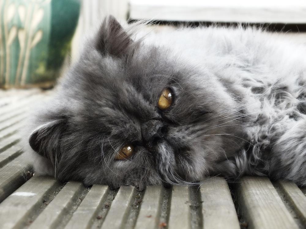 Колтунорезка для кошек: как ей пользоваться?