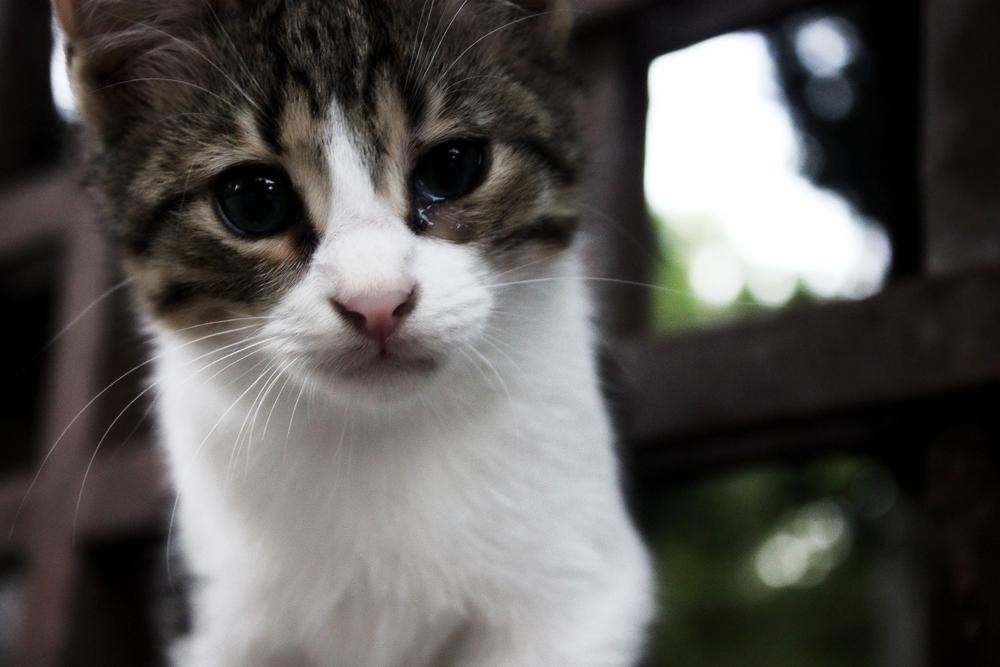 Если у котят гноятся глазки что делать