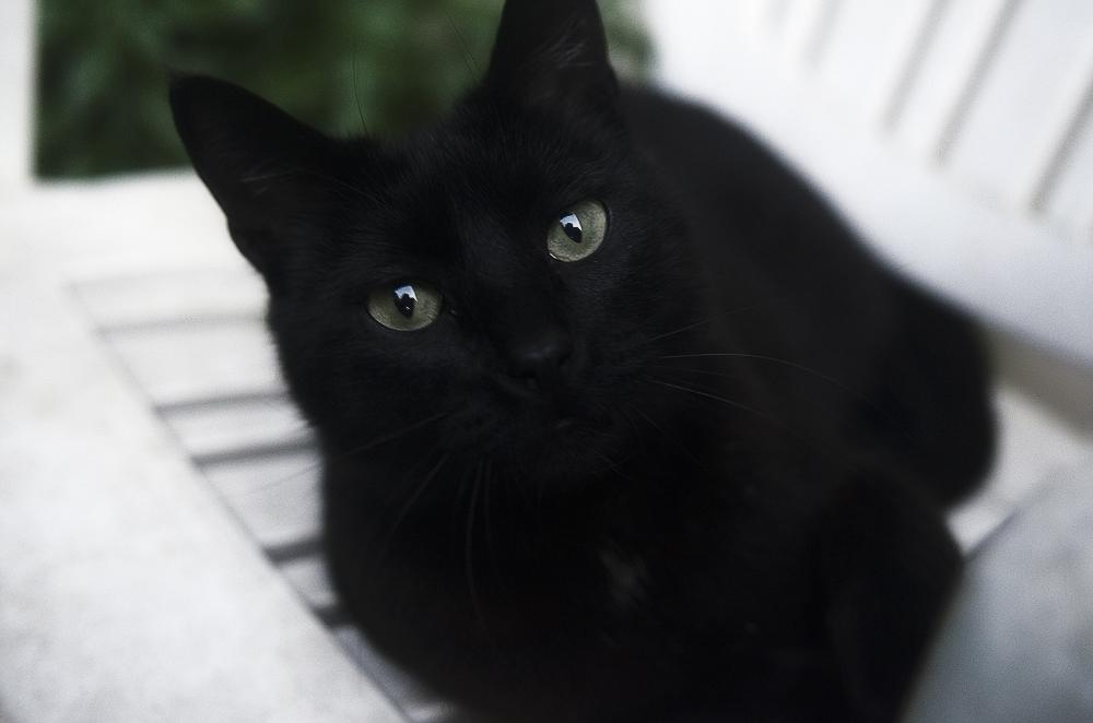 Течка у кошек - всё об этом важном периоде в жизни ваших питомцев