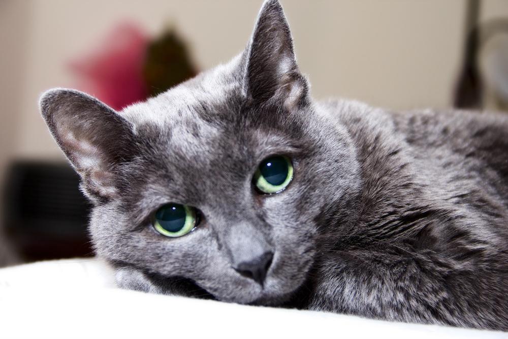 Что делать если кот сильно лезет