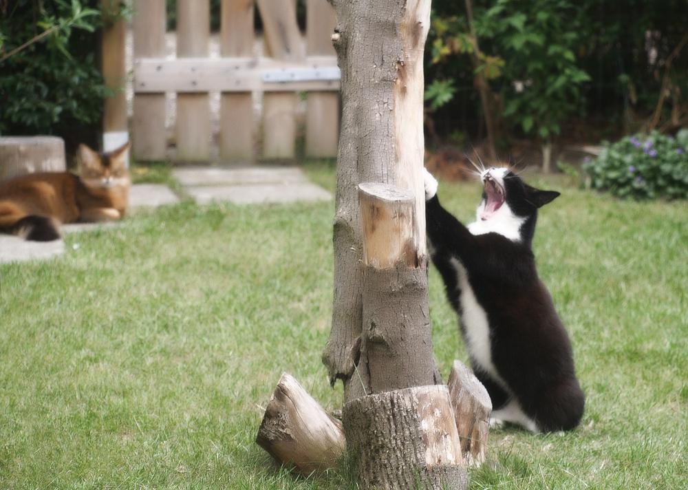 Как отучить кота драть обои и мебель?