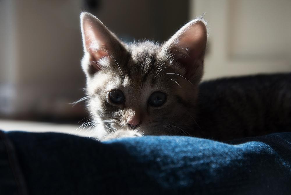 Самый лучший корм для котят: как выбрать