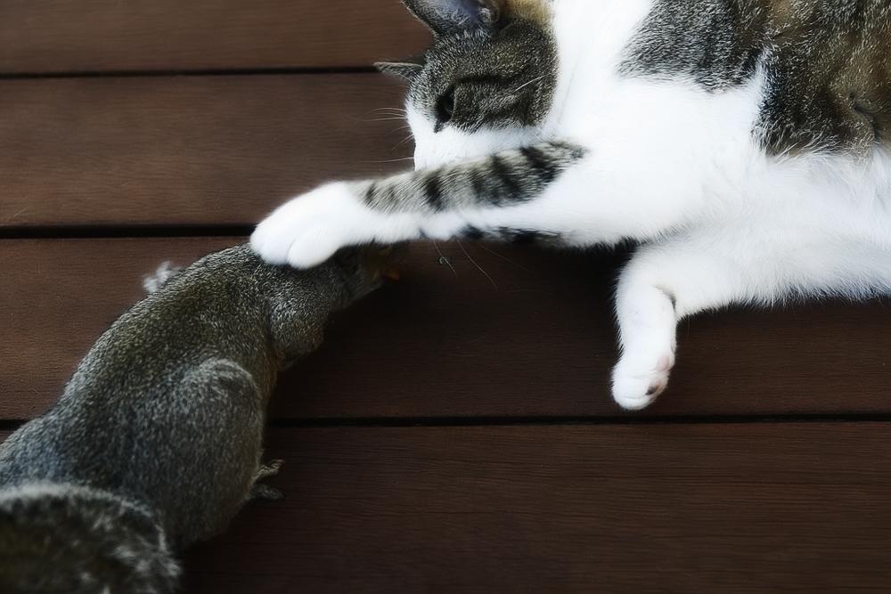 Микроспория и трихофития у кошек