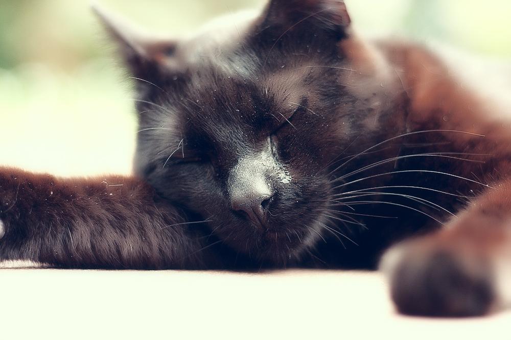 У кошки слезятся глаза: что делать?