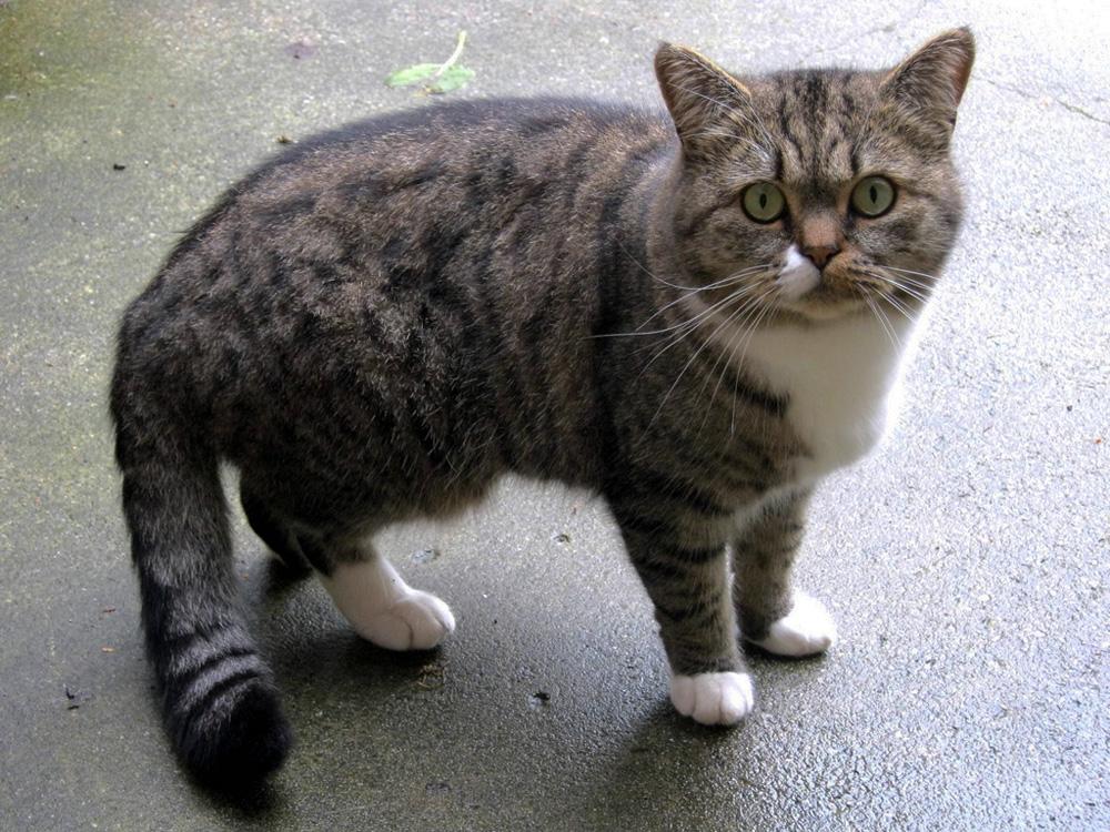 Как отучить кота гадить в неположенном месте?
