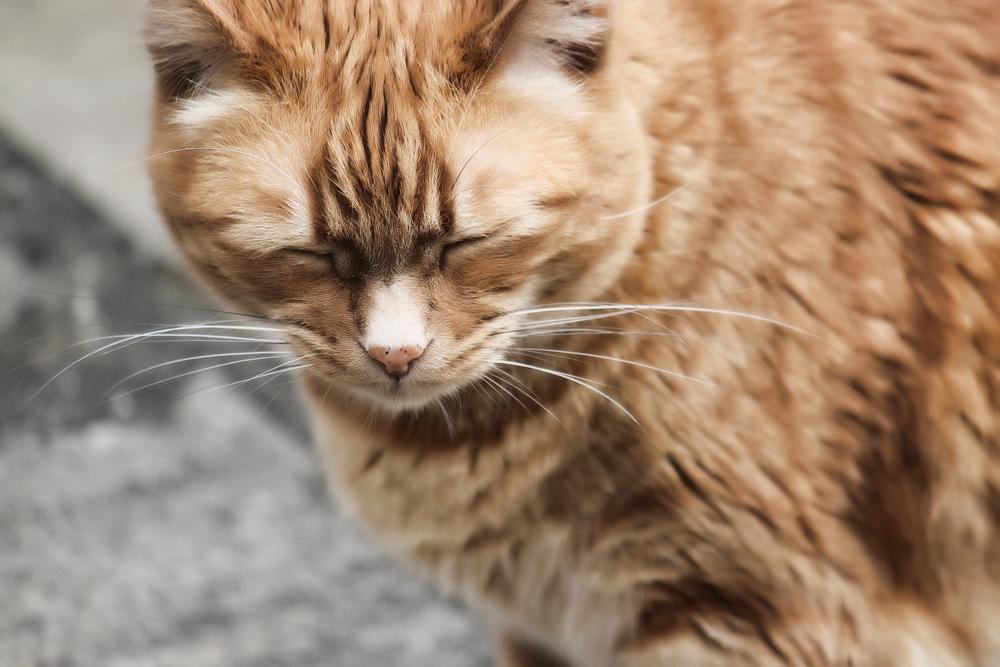 Что делать, если у кота запор: лечение в домашних условиях