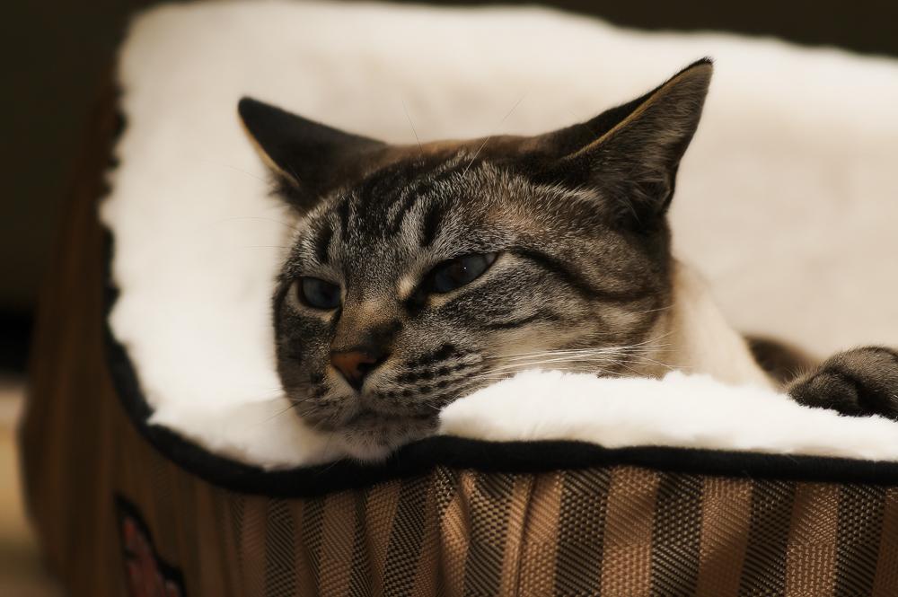 Корм для кошек супер премиум класса: рейтинг производителей