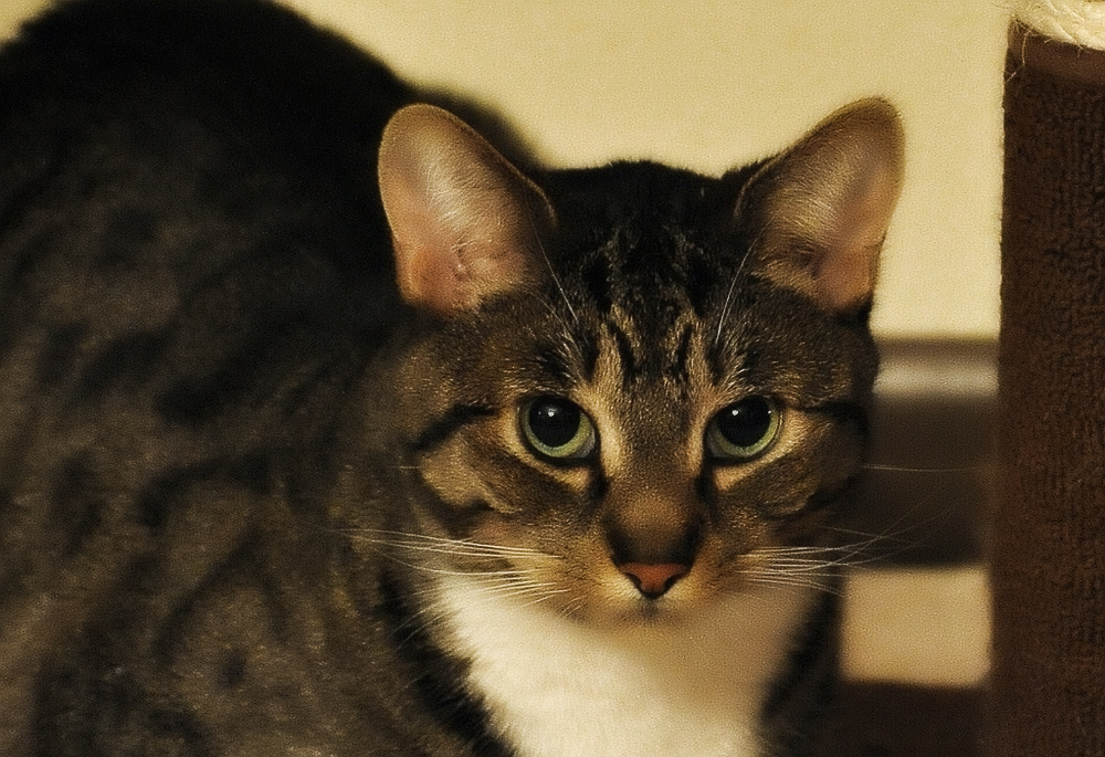 Кошку рвет после еды непереваренной пищей - причины недуга и способы его лечения