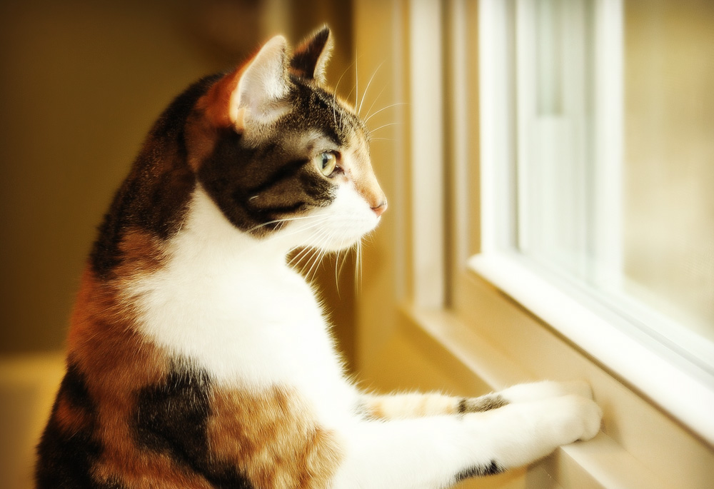 Сильное сотрясение у кота: что делать?