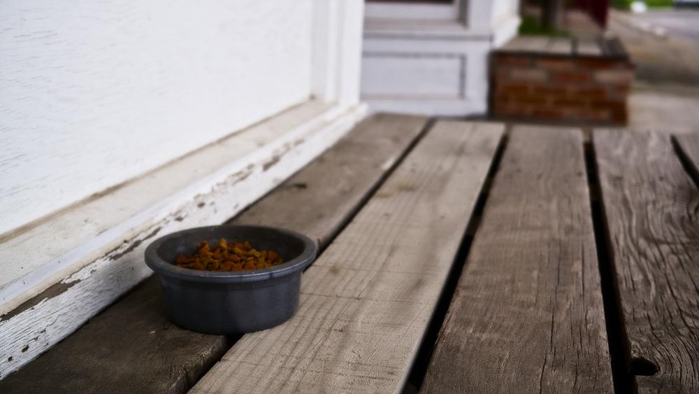 Корм для кошек премиум-класса: список сухих и влажных кормов