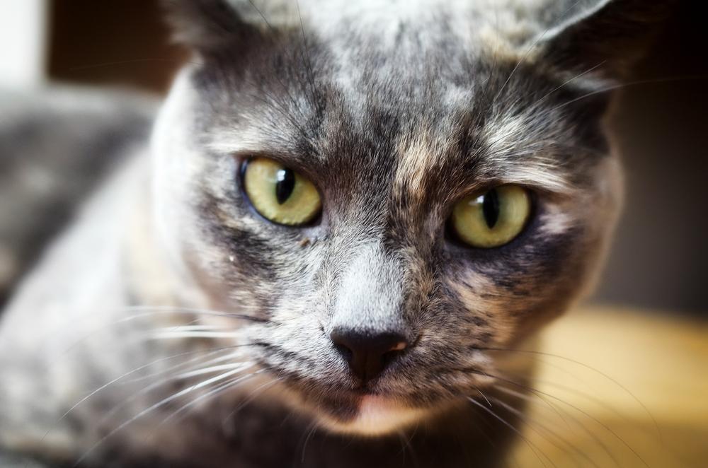 У кота лезет шерсть: что делать?