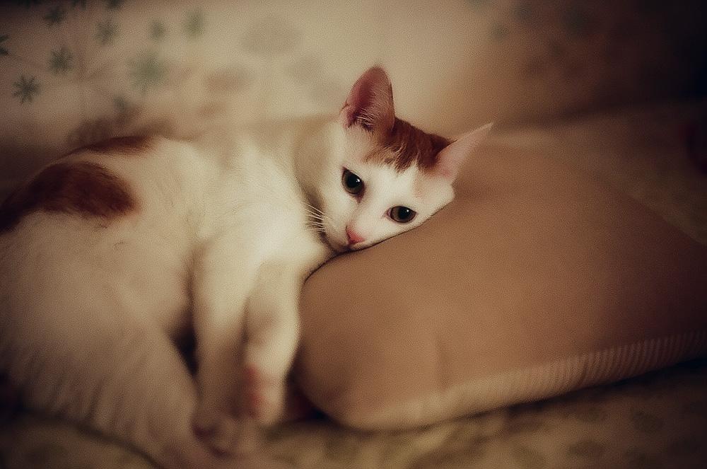 Что делать, если кот не может сходить в туалет по-маленькому?