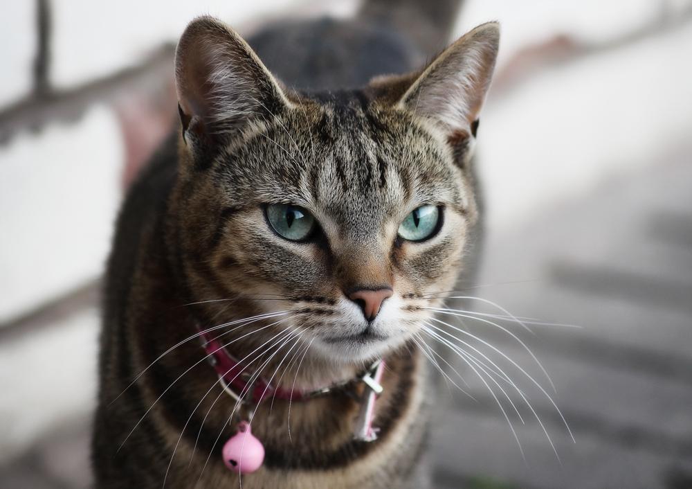 Капли от блох для кошек - отзывы и рекомендации