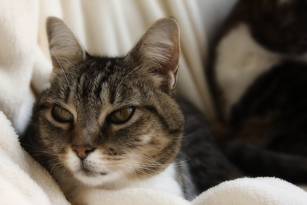 Болезни кошек: симптомы и лечение