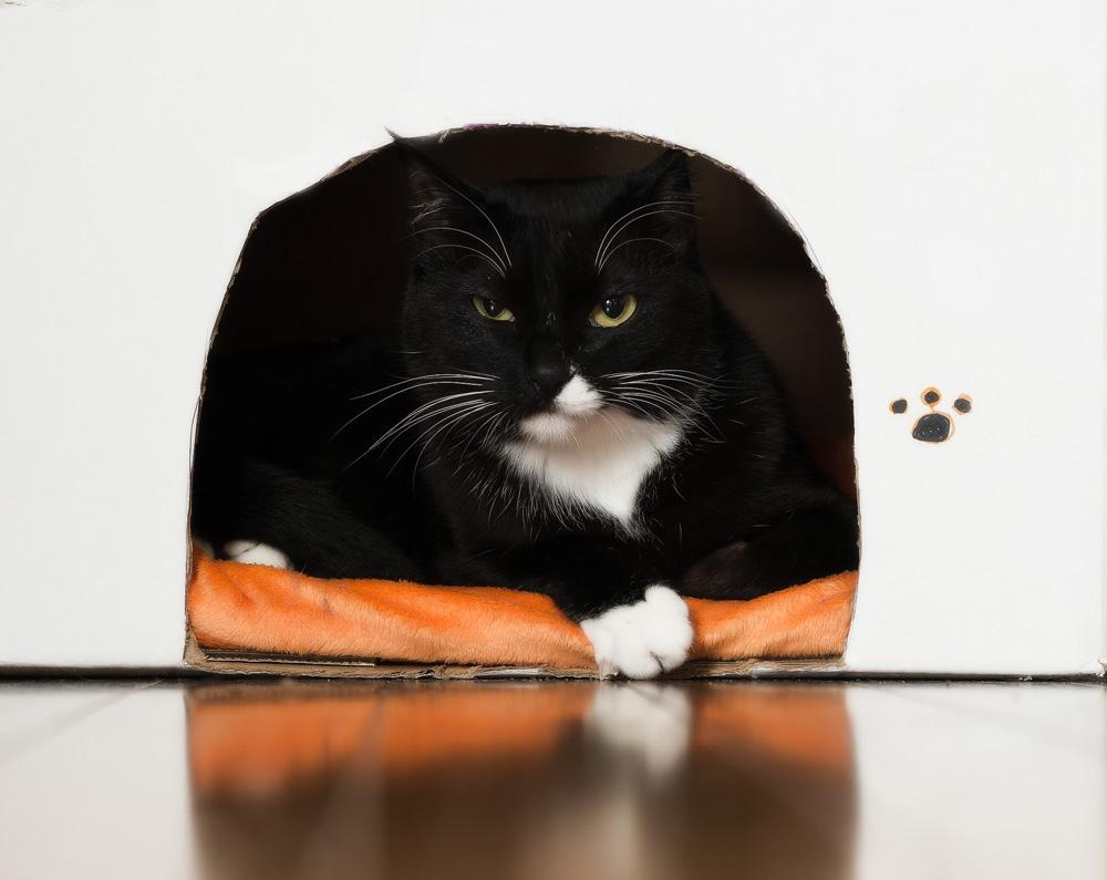 Как сделать домик для кошки из коробки?