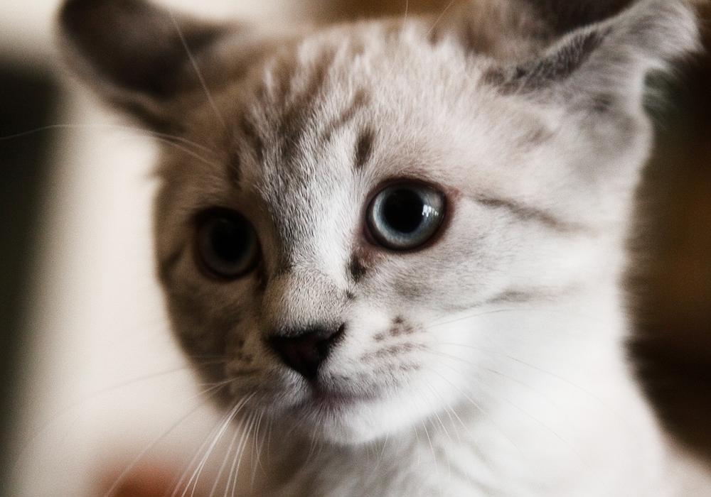 аллергия на котов как бороться