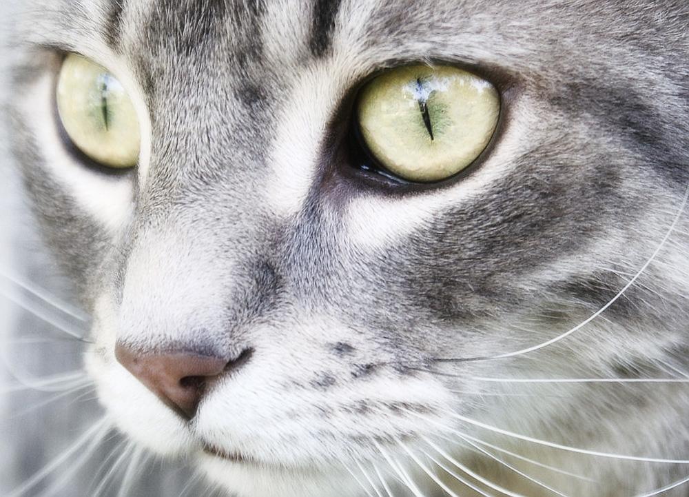 Какой нос должен быть у здоровой кошки?