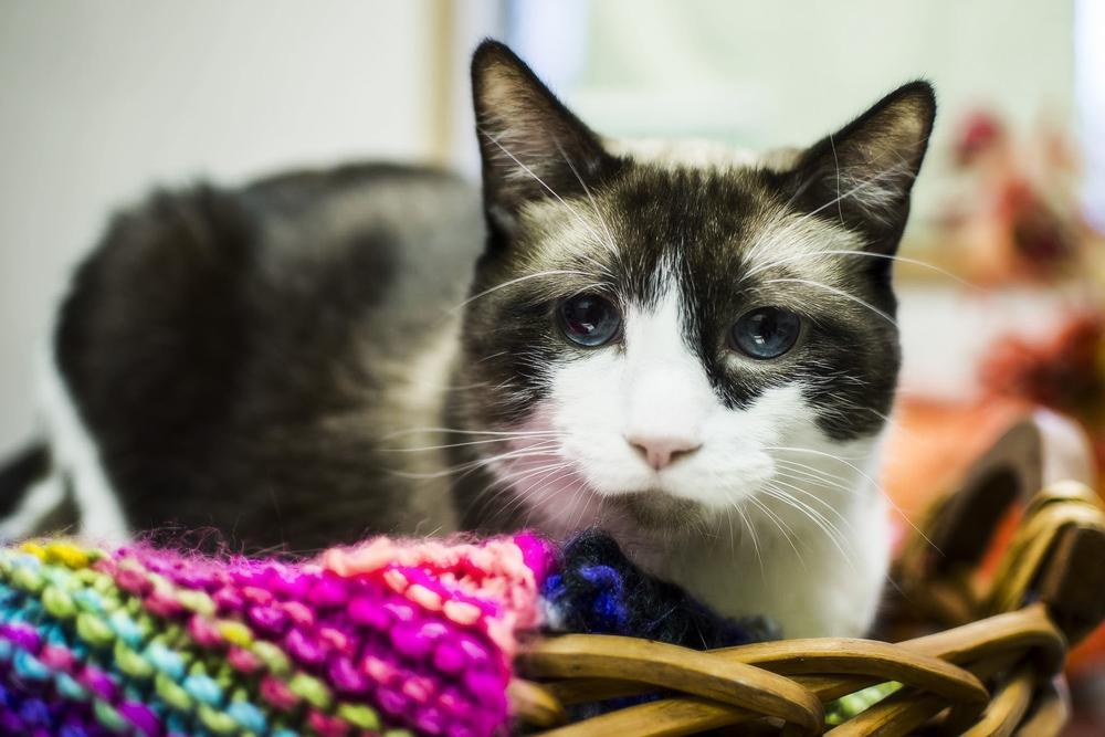 Как усыпить кошку в домашних условиях самому?