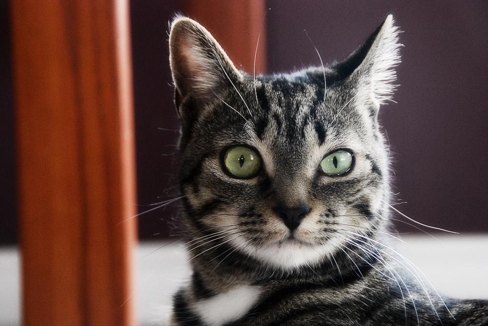 Воротник для кошки инструкция