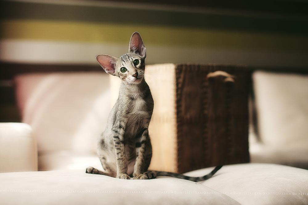 Суролан для кошек: инструкция по применению