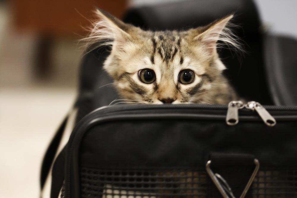 Мультифел-4 для кошек: инструкция по применению