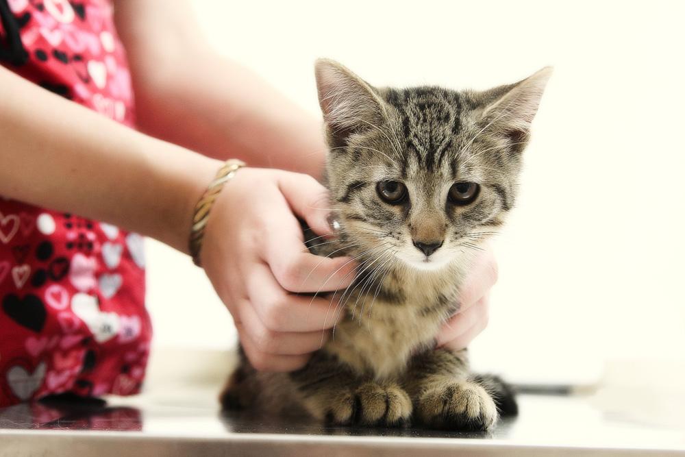 Мультифел-4 для кошек: инструкция по применению.