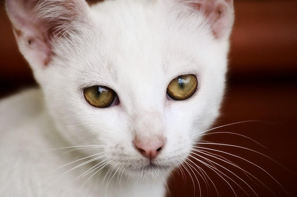Кошка ничего не ест и не пьет: что делать?