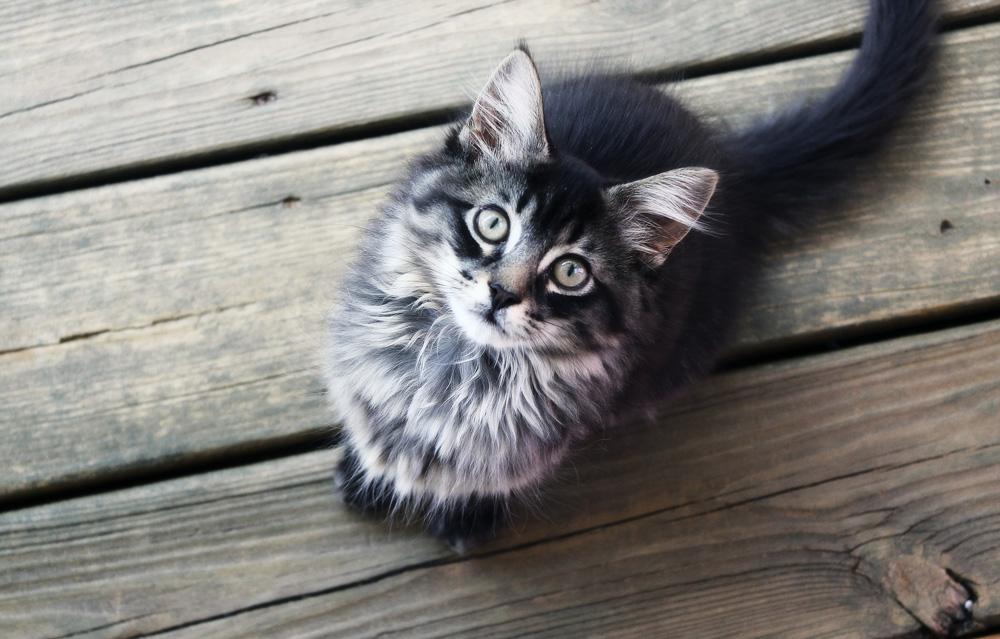 Синулокс для кошек: инструкция по применению