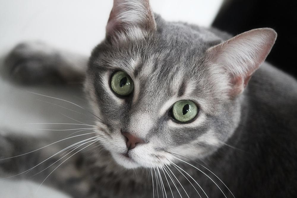 О том, как поставить клизму кошке в домашних условиях, смотрите в этом 90