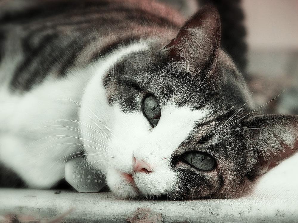 Что делать если моя кошка загуляла в домашних условиях 446