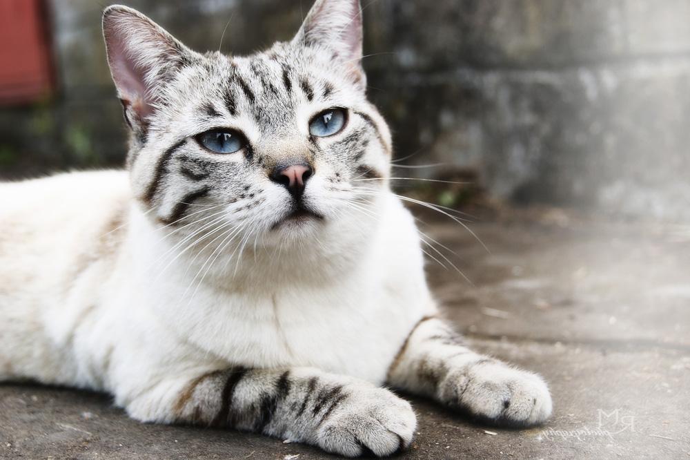 Как успокоить кошку хочет кота но его нет в домашних условиях