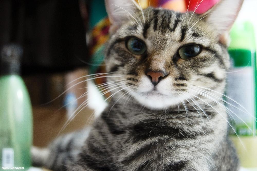 Празител для кошек и котят: инструкция по применению